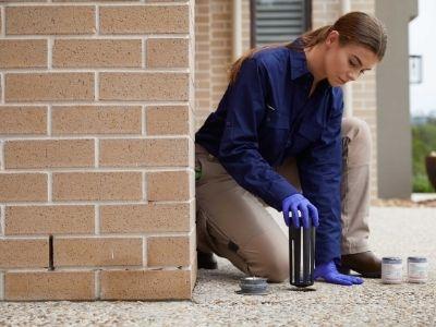 termite control treatment ipswich area qld 4305